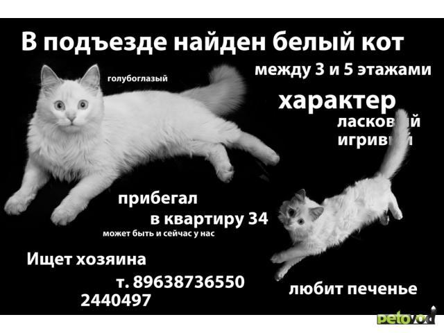 Потерялся/Нашелся: Найдена белая кошка
