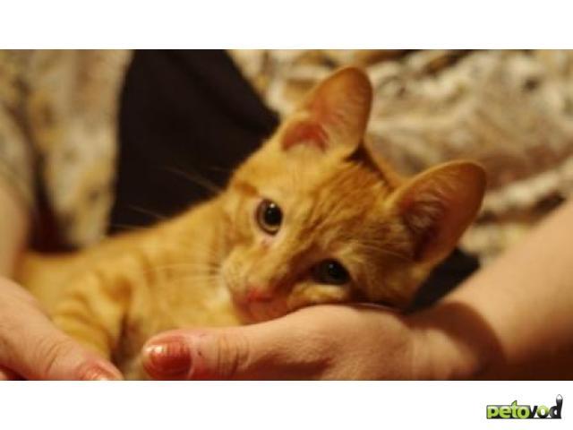Отдам в дар: Отдам умного и ласкового котенка