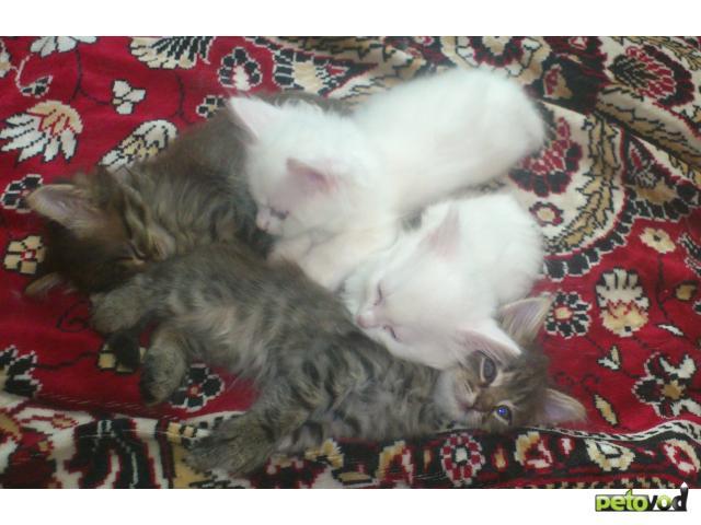 Отдам в дар: Очаровательные котята