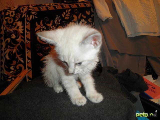 Отдам в дар: Спасенный очень ласковый котёнок в дар