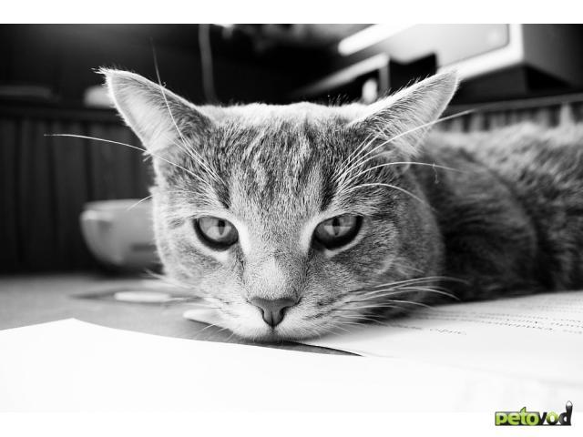Отдам в дар: Отдается лучший в мире кот (3 года)