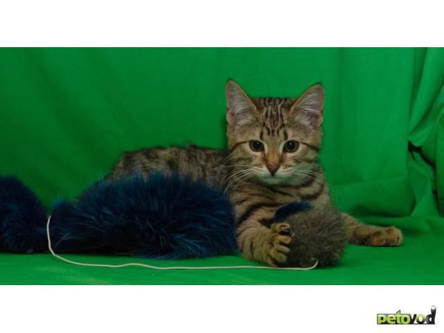 Отдам в дар: Котята 3,5 мес в дар