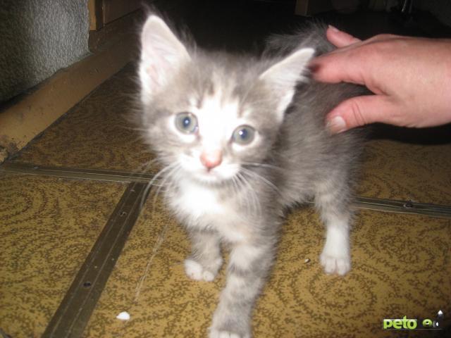 Отдам в дар: Котёнок, 1,5 мес в дар