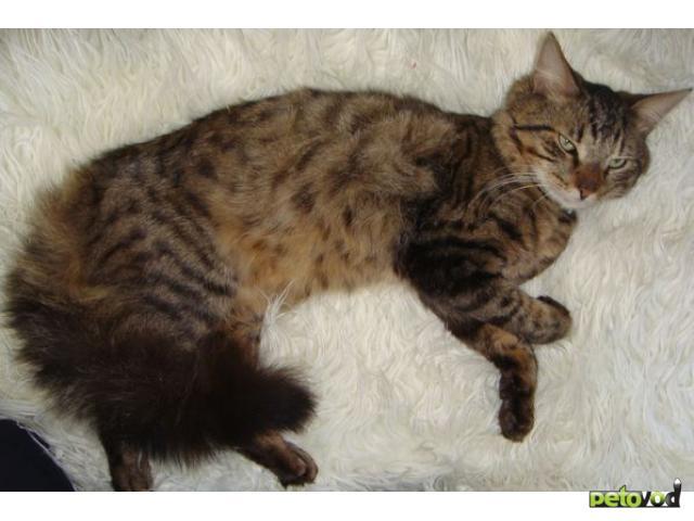 Отдам в дар: Котик в добрые руки