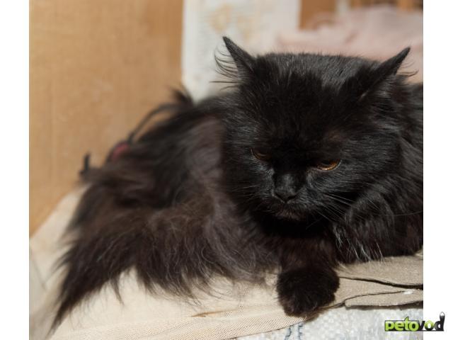 Отдам в дар: Взрослых кошек в добрые руки