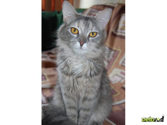 Отдам в дар: Кошечка Фрося ищет заботливых хозяев