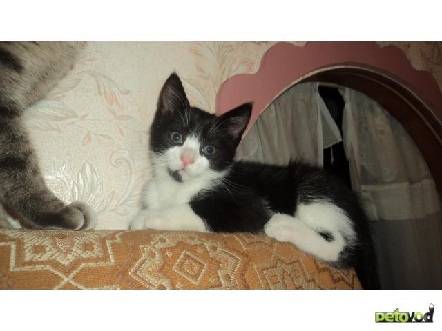 Отдам в дар: Отдам в заботливые, добрые руки котенка
