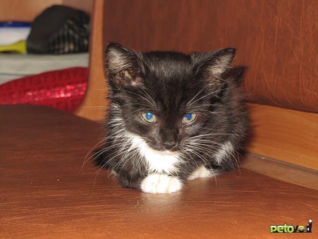 Отдам в дар: Отдам в добрые руки котенка