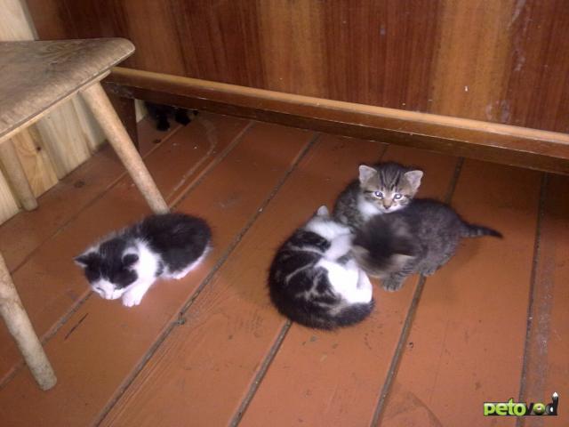 Отдам в дар: Приблудная кошка на даче родила 5 котят