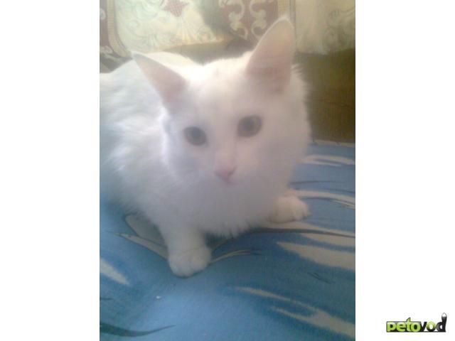 Потерялся/Нашелся: Пропал белый кот, Щелковское шоссе д26