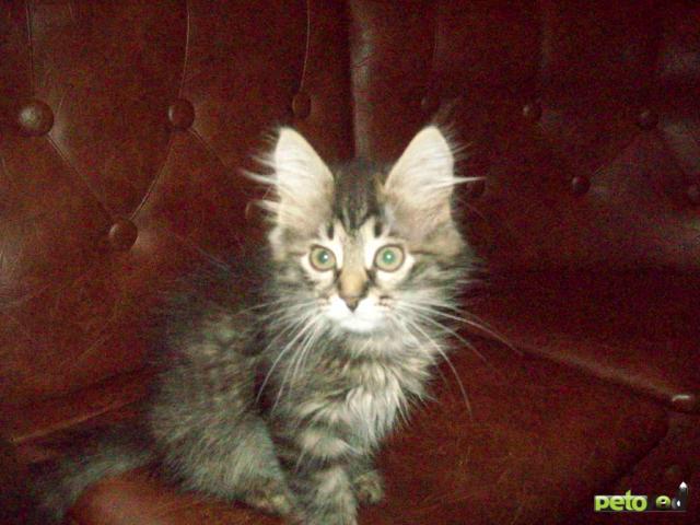 Отдам в дар: Очаровательный котенок в добрые руки