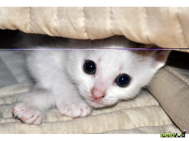 Отдам в дар: Котята в дар 1 месяц