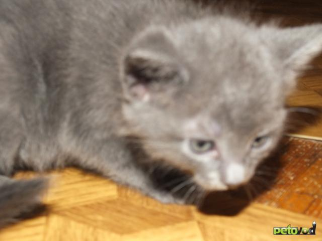 Отдам в дар: Котята-метисы в хорошие руки