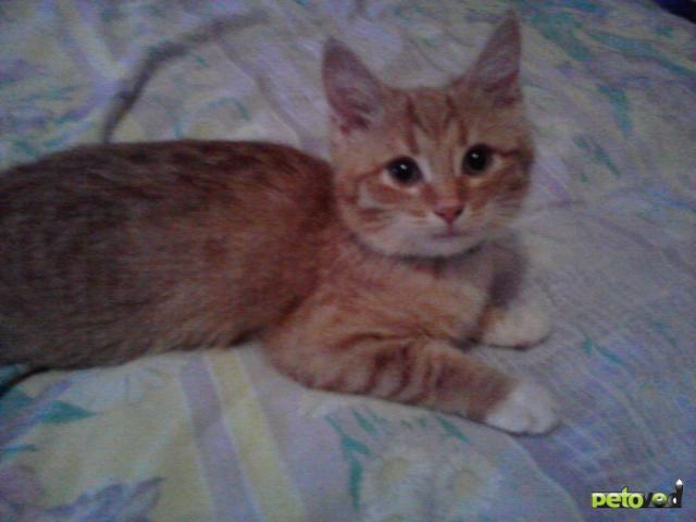 Отдам в дар: Забавный котик Нафаня Отдам даром