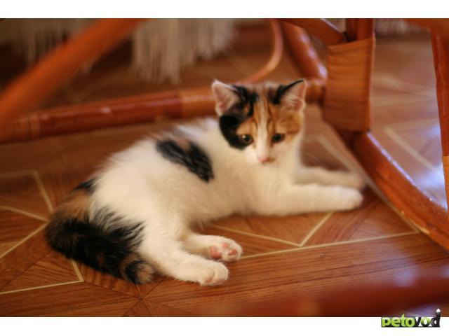 Отдам в дар: Котенок в добрые и ответственные руки