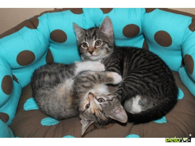 Отдам в дар: Очаровательные котята в добрые руки