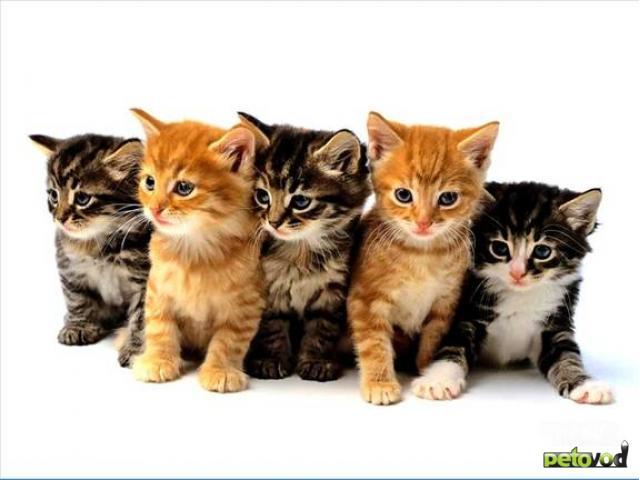 Продаю:  отличных котят