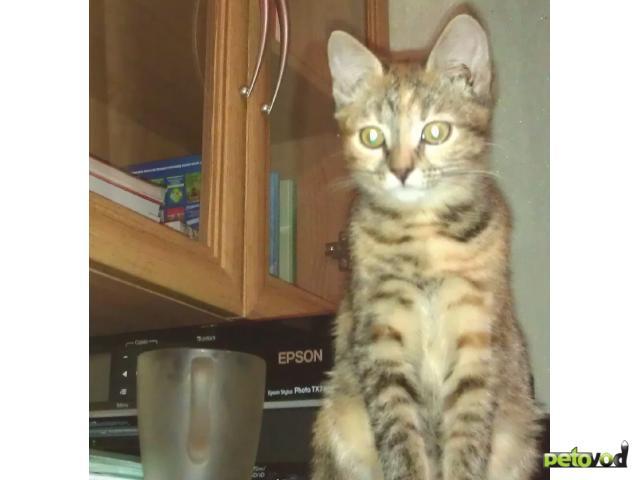 Отдам в дар: Кошечка 5 месяцев в хорошие руки