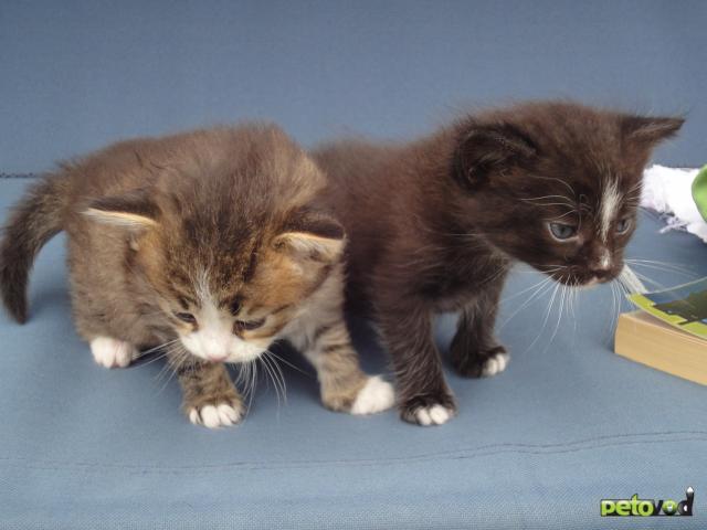 Отдам в дар: Котята в хорошие руки