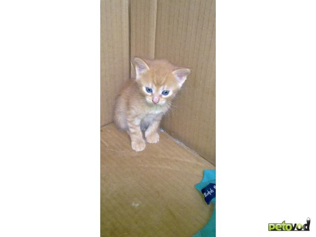Отдам в дар: Отдам в хорошие руки котяток