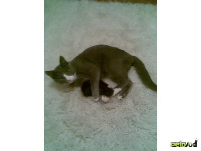 Потерялся/Нашелся: Пропал кот Сёма гОмск район улПопова 161е