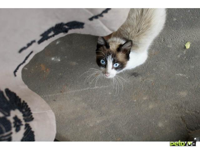 Отдам в дар: Кому толстолапых котят в дар