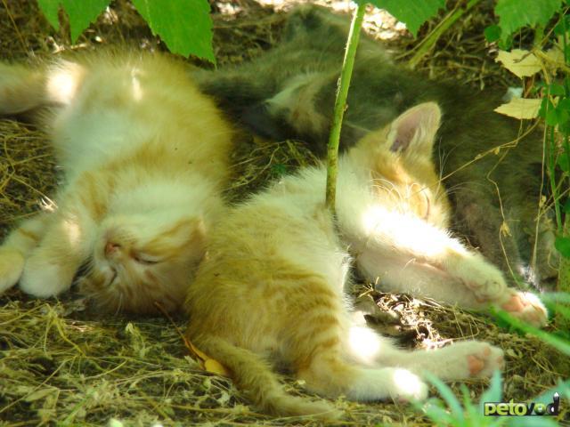 Отдам в дар: Котята в поиске своих хозяев